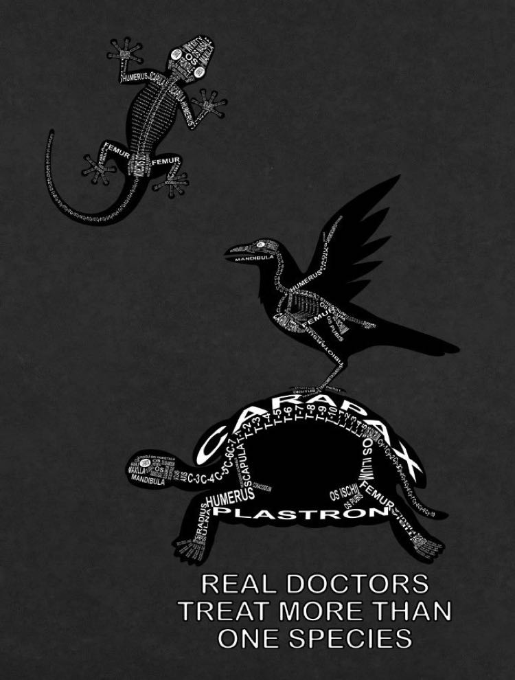 Real Doctors Treat more than one Species: Exoten Detail Skelett mit lateinischen Bezeichnungen der Knochen - T-Shirts für Tierarzt - Schildkröte, Rabe, Gecko